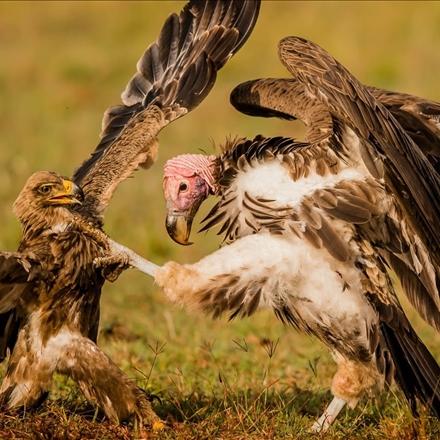 دعوای پرندگان