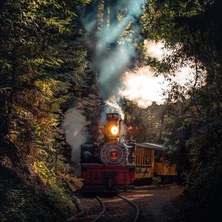 عبور قطار در دل جنگل