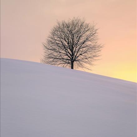 تصویری متفاوت ازفصل زمستان