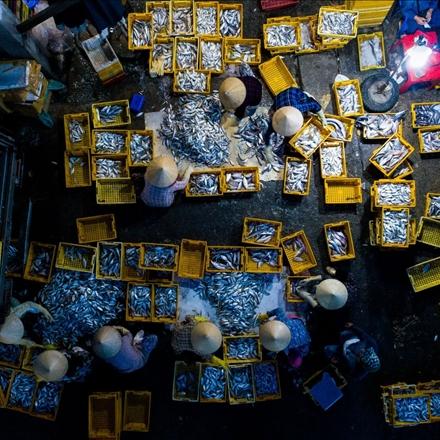 عکس بازار ماهی فروش ها