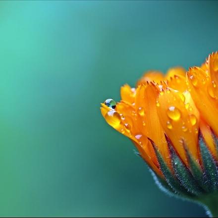 عکس گل های با نشاط