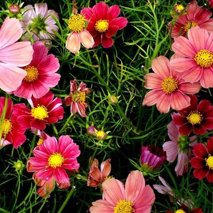 گل های با طراوت