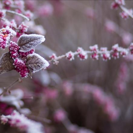 تصویری زیبااززمستان