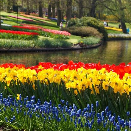 دشت گلهای لاله در هلند