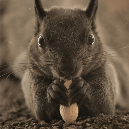 تصویری زیبا از یک سنجاب