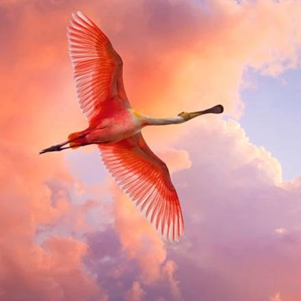 تصاویر فوق العاده زیبا از پرندگان