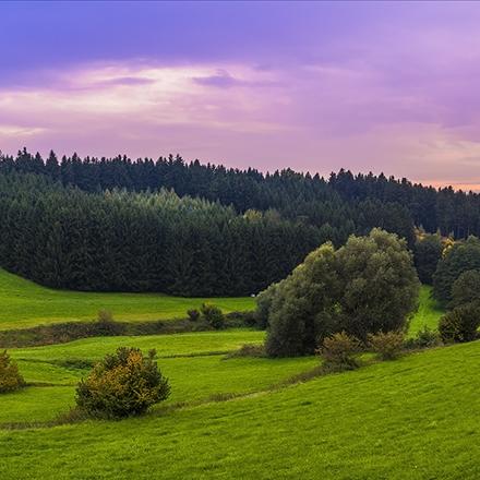 طبیعت جنگل بکر