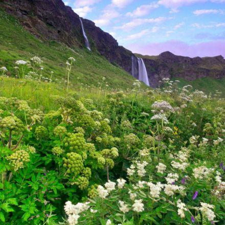 دشت گل ها در کنار آبشار زیبا