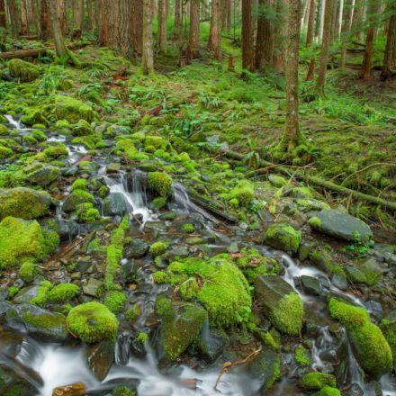 نهر پر آب در جنگل