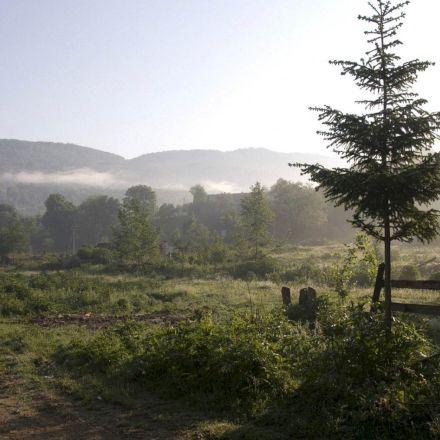 هوای مه آلود جنگل