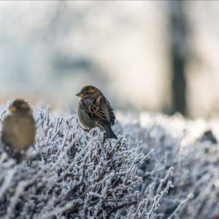 پرندگان در زمستان