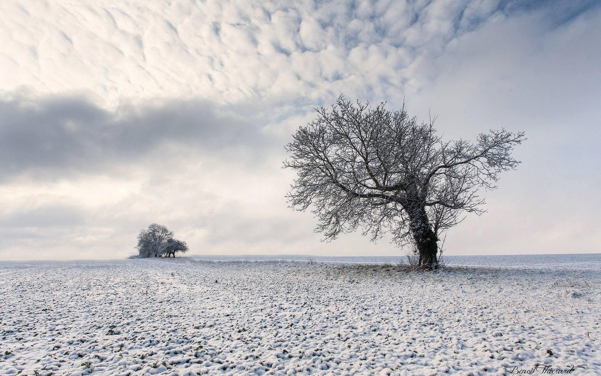 روزهای برفی زمستان