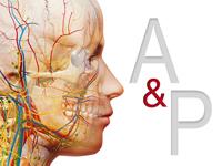 نمایش سه بعدی آناتومی بدن انسان