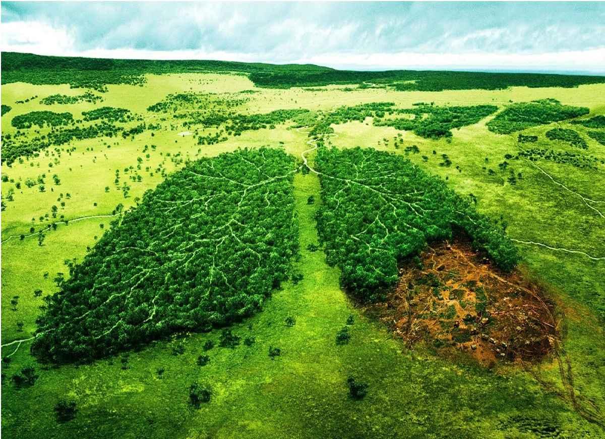 راهکارهایی برای کاهش آلودگی های زیست بوم ها در سال جهش تولید