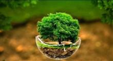 چند راهکار ساده برای حفاظت از محیط زیست