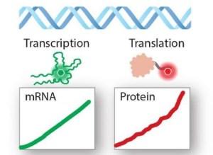 بیومولتیمتر برای اندازه گیری تولید بلادرنگ RNA و پروتئین