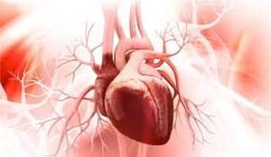 سلولهایی بنیادی از جفت که میتوانند بعد از حمله قلبی، قلب را بازسازی کنند