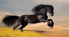 اطلاعاتی ارزشمند در باره اسب عربی