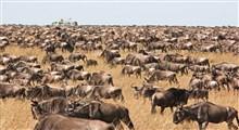 آثار بسیار خطرناک گرمایش جهانی بر حیات وحش