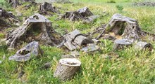راه حلهایی منطقی برای کاهش مشکلات زیست محیطی