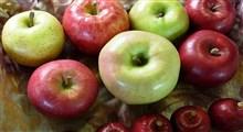 اطلاعاتی جالب در مورد تنوع سیبها و خاستگاه آنها – قسمت اول