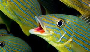ناقل چیره دست سرگذشت ماهیها