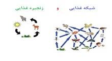 تفاوت میان زنجیره غذایی و شبکه غذایی