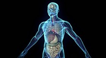 عضوهایی از بدن که عملکرد آنها کشف نشده