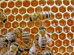 زنبورها میتوانند نمادها را به اعداد پیوند دهند