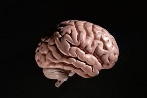 باورهای رایج نادرست درباره مغز