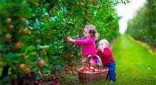 ظرفیت اقتصادی محصولات ارگانیک