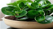 10 گیاه تصفیه کننده هوای خانه
