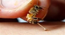 فوبیای زنبور چیست و چگونه درمان میشود؟