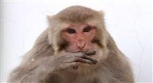 دلیل حرف نزدن میمون ها چیست؟