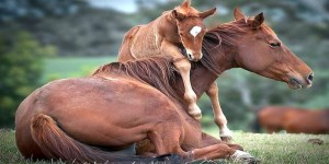 برخی از حقوق و مسئولیت های انسان در قبال حیوانات(بخش دوم)