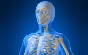دانستنی های جالب در مورد اسکلت بدن انسان