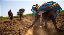 آیا دستکاری ژنتیکی راه حلی برای بحران گرسنگی در جهان است؟