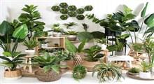دلایل استفاده از گل و گیاه در طراحی دکوراسیون خانه