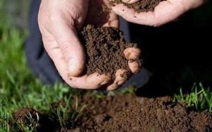 محققین یک گروه از آنتی بیوتیک های جدید را از خاک استخراج کردند