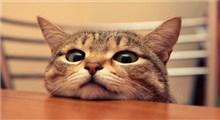 همه چیز راجع به ترس از گربه