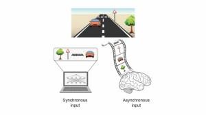 مغز الهام بخش نوع جدیدی از هوش مصنوعی است