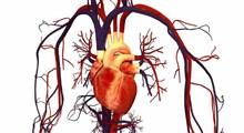علائم نارسایی احتقانی قلب و راه های درمان آن