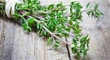 آویشن؛ گیاه معجزهگر در درمان بیماریها
