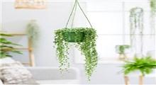 گیاه مناسب برای آپارتمان تنبل ها