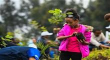 درخت پروری، مهمتر از درختکاری