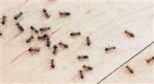 حقایقی باورنکردنی درباره مورچه ها
