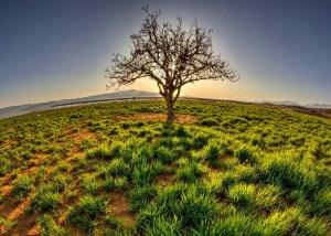 راه دستیابی به درخت طوبای بهشتی (بخش دوم)
