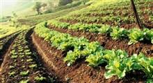 نقش کشاورزی هوشمند در توسعه کشاورزی پایدار