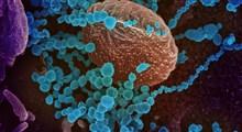 کمک زیست شناسی ساختاری در یافتن داروی کرونا ویروس