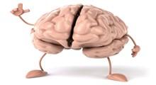 نیمکره راست مغز در برابر نیمکره چپ مغز